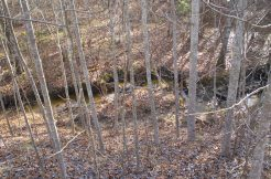 #1718 – Deer Haven Tr. – Spruce Creek
